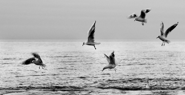 gulls by katster