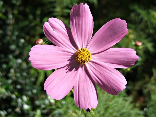 Flower by Lourens_Vorster