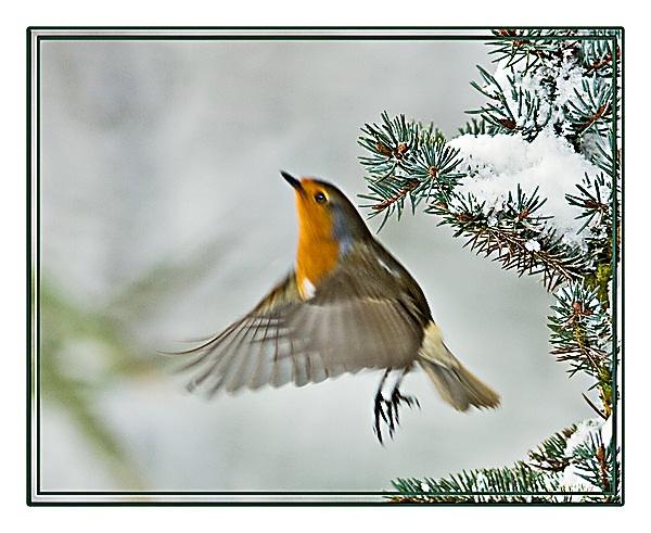 Bobbin\' Robins by teocali