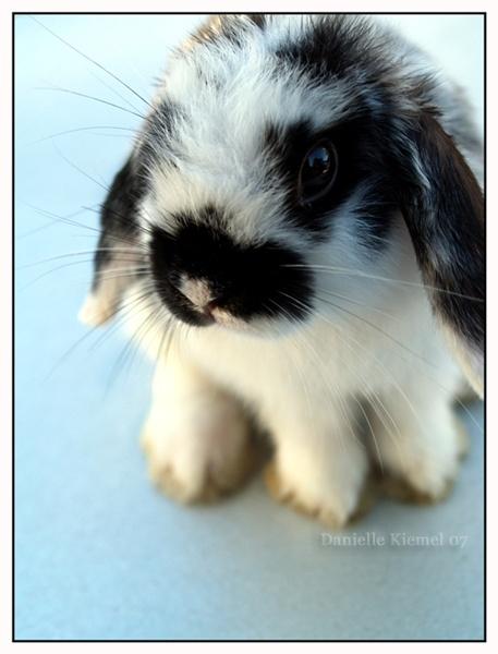 Bunnyboo by daniellekiemel