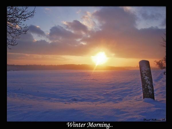 Winter Morning... by stuhalloran