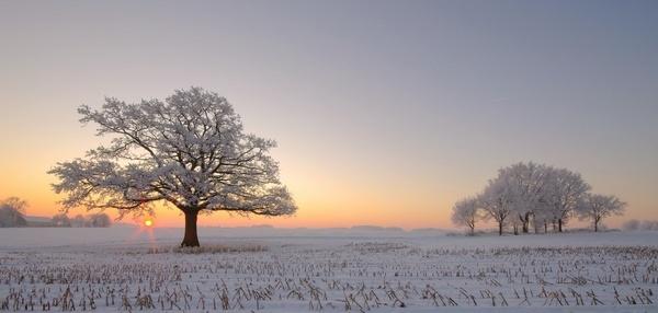 My favorite tree by PeterK001