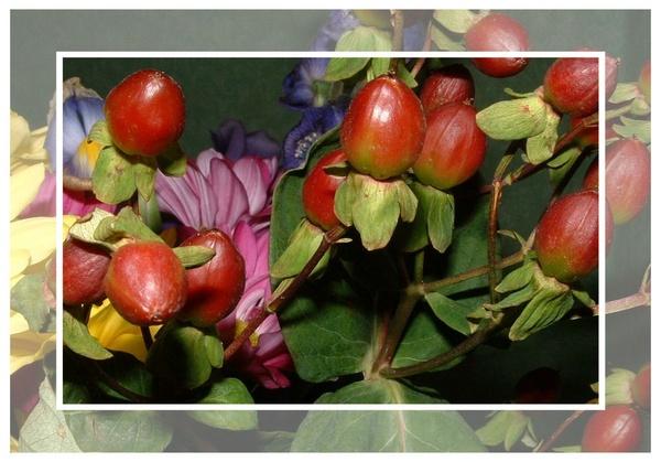 Berries by sanjan