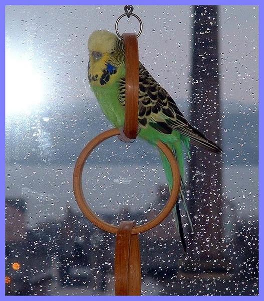Blondie on the rings at the window by sanjan