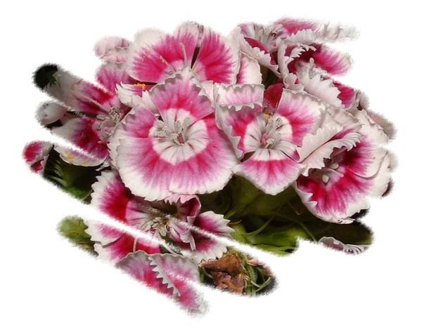 Pink by sanjan