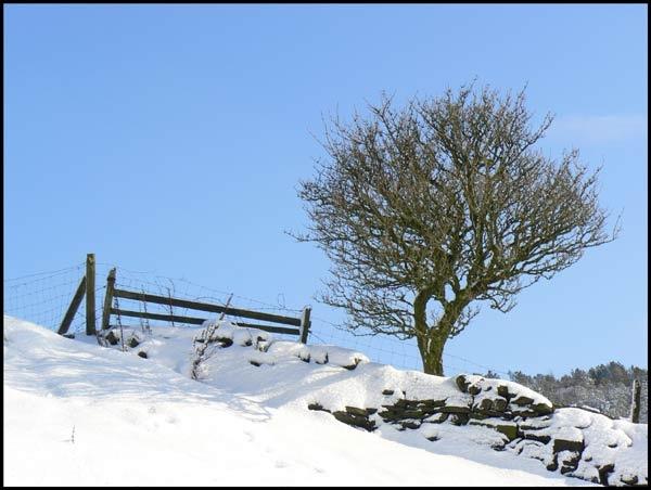 TREE ON THE HILLSIDE by KATJON