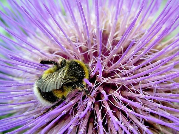 pollen fix by MacroRebel