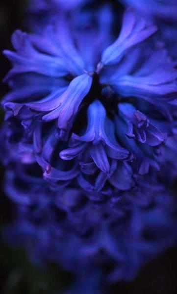 Feeling Blue by SGIBBONS