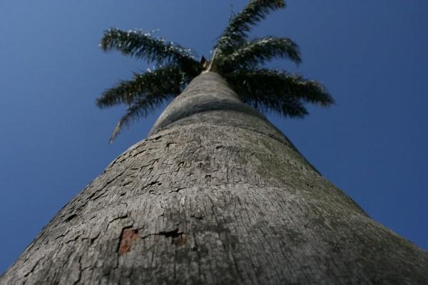 palm tree by x_posure