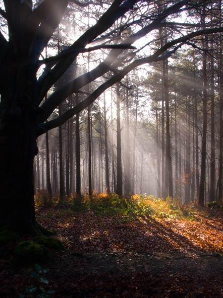 Angley Wood 1 by Paul_Walding