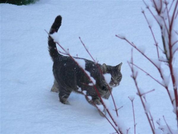 Snow Cat by ValRMN