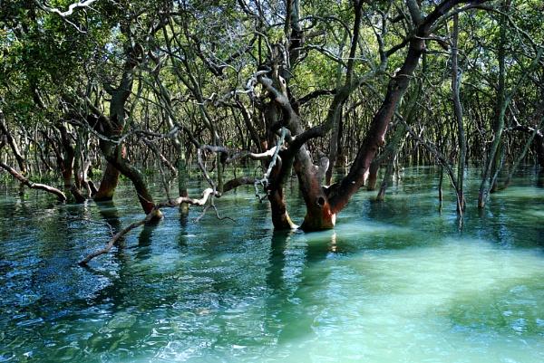 Sun in the Mangroves by Reneehub