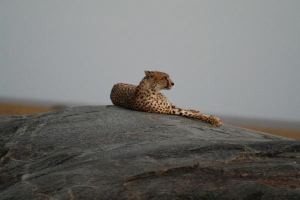 Dusk in the Serengeti by grim