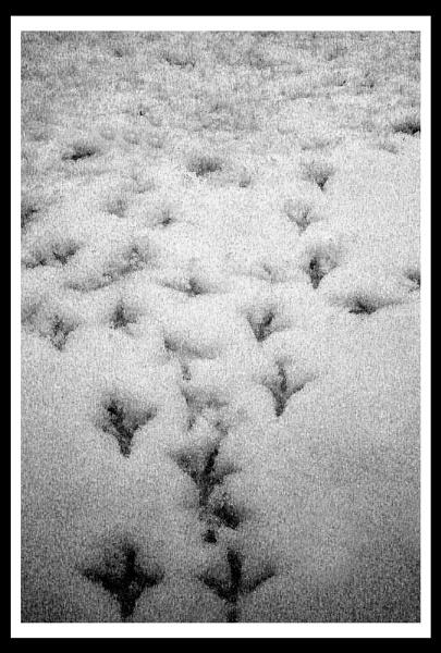 Pigeon steps by jimbo_t