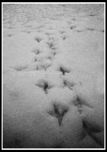Pigeon steps #2 by jimbo_t