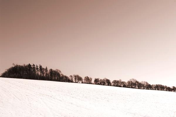 Winter trees by ali graham
