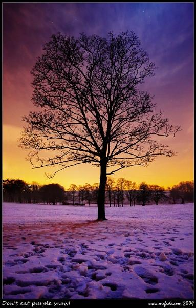 Tree by ade_mcfade