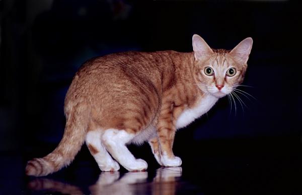 Cat with attitude by stuart davies