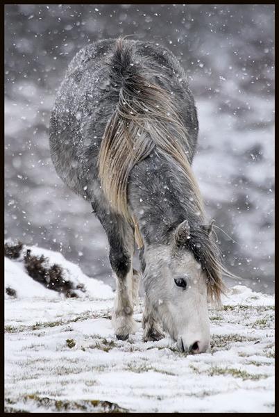 Winter Feed by tywanda46