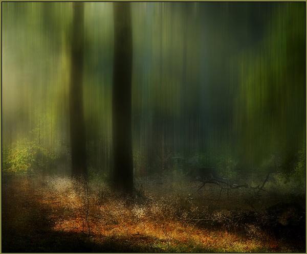 Woodland Light by MalcolmM