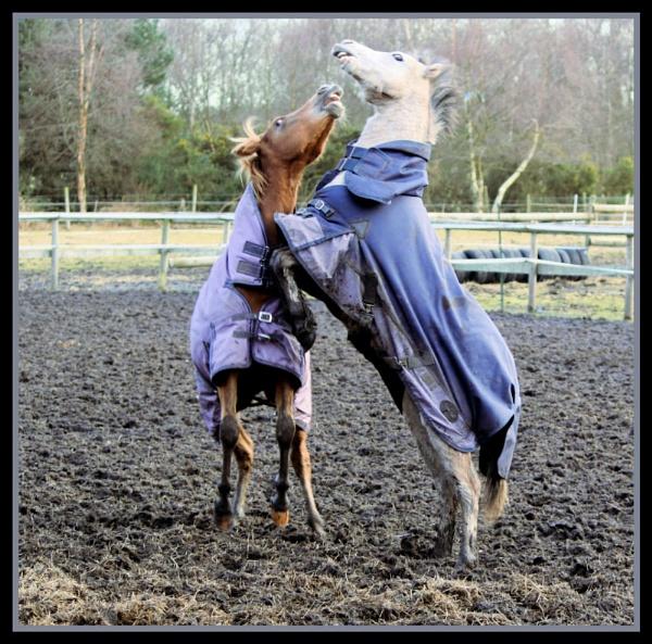 Pony Playtime by X5DJM