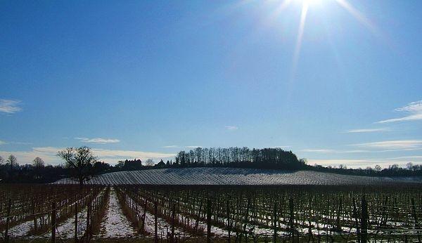 vineyard under snow by nytecam