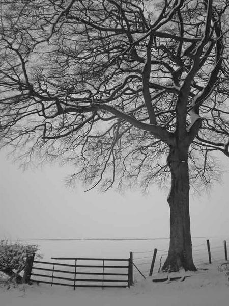 snow gate by simbo76