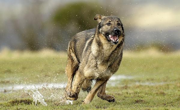 Run! by samfurlong