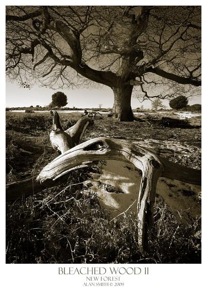 Bleached Wood II
