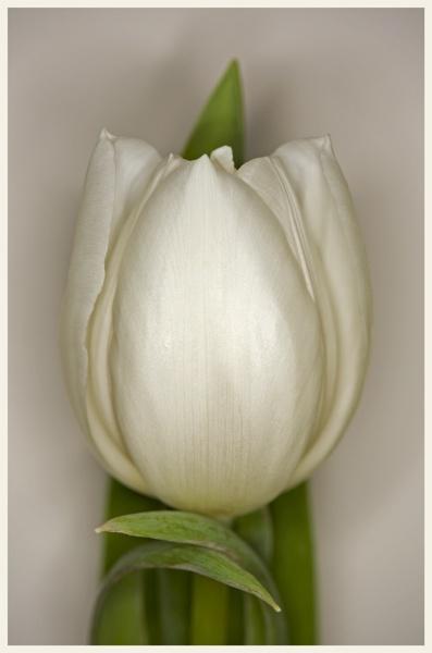 White by brianhaslam
