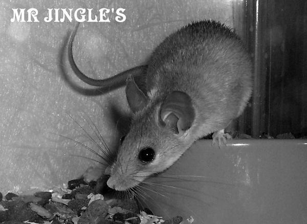 MR JINGLE'S