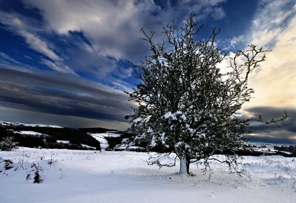 Dartmoor Tree by renavatio