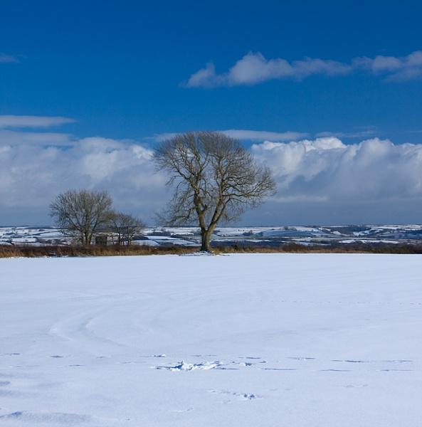 SNOW by dexthersj41