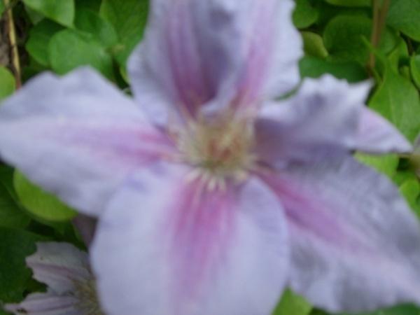 Flower by Supersam