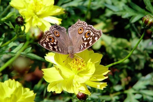 The Butterfly by faraidoon