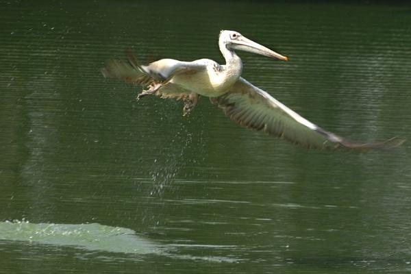 FLY IN by tsreddy