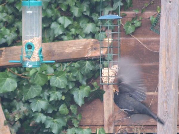 Blackbird Tricks by ExT_Racer