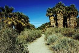 Towards the Palms