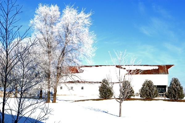 Snow Trees by Reneehub