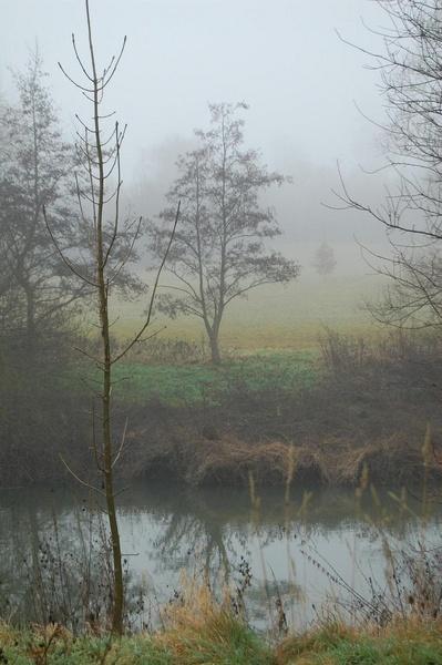 foggy day! by greeneyes