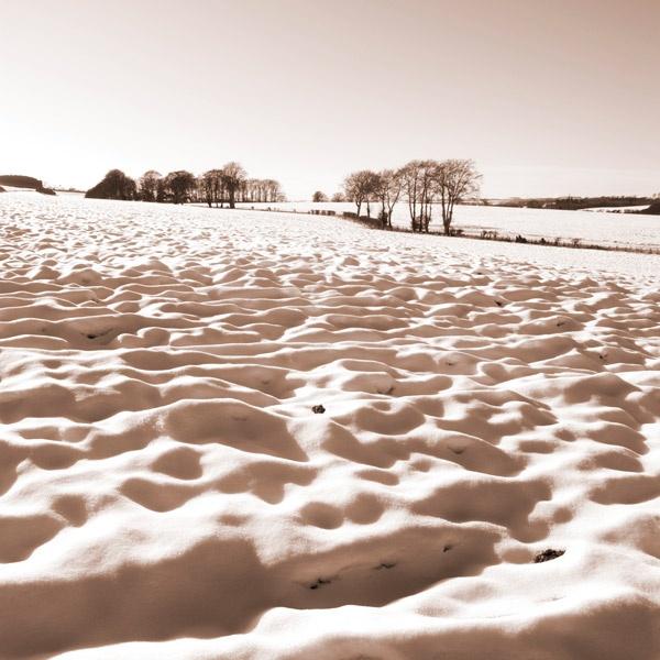 Snow field by ali graham
