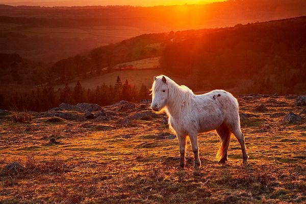 Horse on Dartmoor by mattw