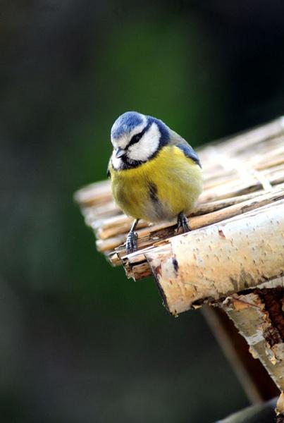 bird by timalban