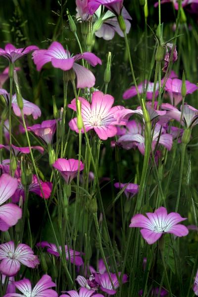Weeds? by stuart davies