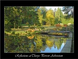Reflections at Thorpe Perrow Arboretum
