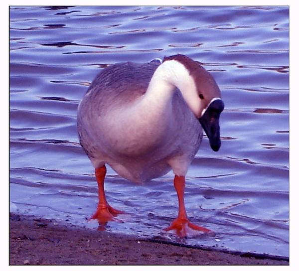 Mother Goose by monashort