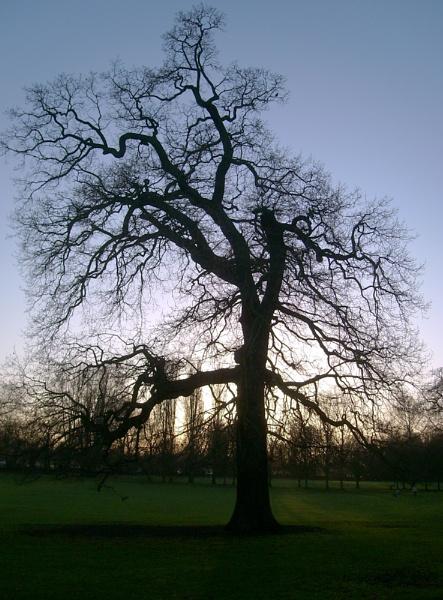 Gnarly Tree by Trogdor