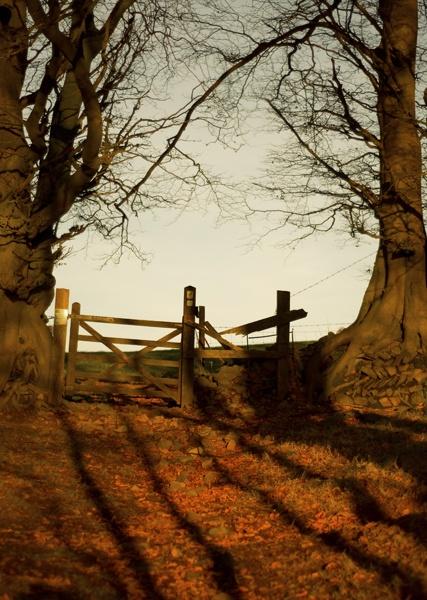 The Gate by birel101
