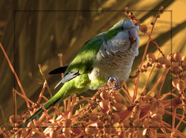 As free as a bird by linda63