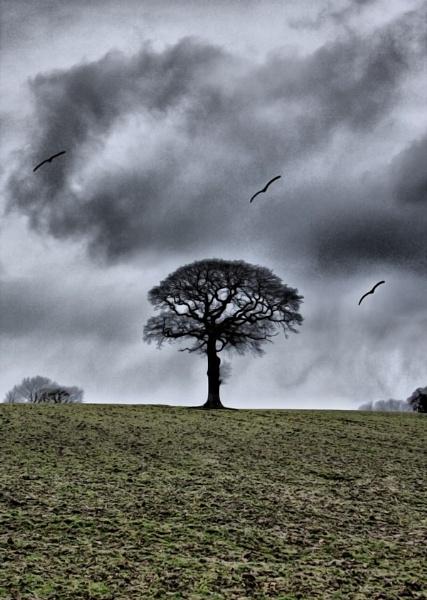 THE BIRDS 2 by dexthersj41